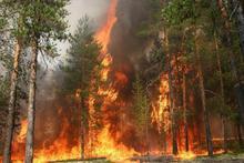 Հրդեհային անվտանգությունն անտառներում