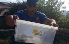 Փրկարարները հայտնաբերել և անվտանգ տարածք են տեղափոխել օձին