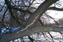 Спасатели убрали дерево с автомобиля