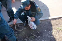 Rescuers removed the snake to a safe area
