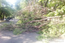 A tree branch fell on the driveway