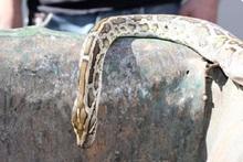 Спасатели перенесли змей в безопасное место