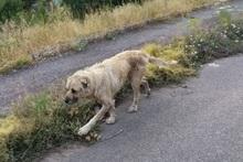 Собака беспокоит жителей