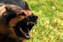 Собака сорвалась с поводка и укусила хозяина