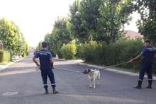 Վահագնի թաղամասում շունը հարձակվել է բնակիչների վրա