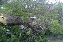Ծառի ճյուղերն ընկել են ավտոմեքենայի վրա