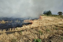 Firefighters extinguished fire broken out in about 129.75 ha grass areas