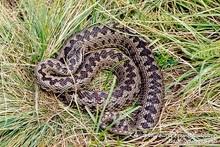 Փրկարարներն անվտանգ տարածք են տեղափոխել օձերին
