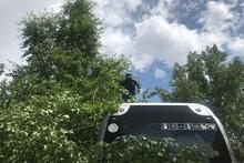 Փրկարարները ճյուղը հեռացրել են ավտոբուսի վրայից