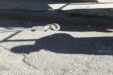 Спасатели перенесли змею в безопасное место