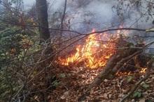 В общине Берд сгорело около 4 га лесных листьев и 20 деревьев