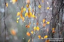November forecast and climatic characteristics