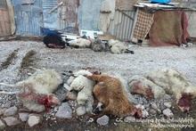 На горе возле города Мартуни волки загрызли 27 баранов