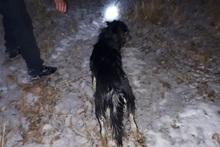 «Քանաքեռի ՀԷԿ»-ի մոտակա լիճը շուն է ընկել