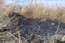 Пожарные-спасатели потушили пожары на травяных участках общей площадью около 1.5 га