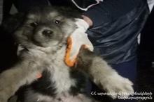 Спасатели вытащили собаку из ямы