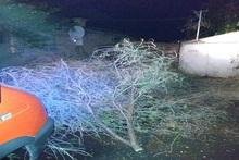 Փրկարարները մասնատել են ծառի ճյուղը և բացել ավտոտնակի մուտքը
