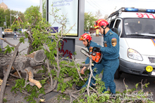 Rescuers cut the damaged tree