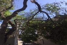 Փրկարարները ծառի կոտրված հատվածը հեռացրել են անվտանգ տարածք