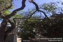 Rescuers transferred the broken part of a tree to a safe place