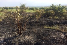 Firefighters extinguished fires broken out in grasslands with a total area of about 7.3 ha