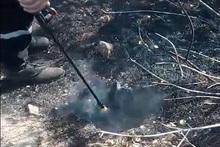 Այրվել են վնասված ծառի արմատներ