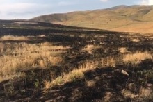 About 20 hectares of grassland burnt