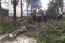 Փրկարարները հեռացրել են ծառի ճյուղերը սրճարանի տարածքից