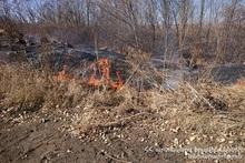 1 hectare of vegetation burnt