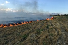 Firefighters extinguished fires broken out in the area of about 1500 square meters in total