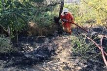 Пожарные-спасатели потушили пожары на территории общей площадью 7.9 га