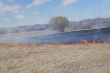 Пожарные-спасатели потушили пожары на территории общей площадью 117,46 га